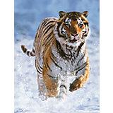 Пазл «Тигр на снегу» 500 деталей, Ravensburger