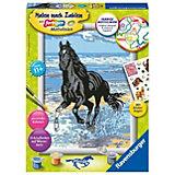 Malen nach Zahlen Pferde - Pferd am Strand, 18x24 cm