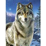 Malen nach Zahlen Artists Collection ab 8 Wolf
