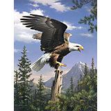 Malen nach Zahlen Artists Collection ab 8 Adler