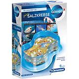 Galileo - Original Salzkrebse