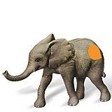 tiptoi® Spielfigur Afrikanisches Elefantenkalb
