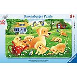 Пазл в рамке «Любопытные щенки», 15 деталей, Ravensburger
