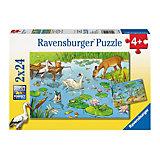 Набор пазлов «На пруду» 2х24 деталей, Ravensburger