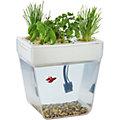 Аква-ферма - самоочищающийся аквариум