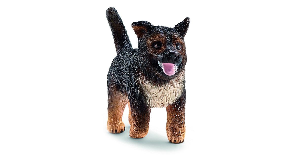 Hunde: 16832 Schäferhund Welpe