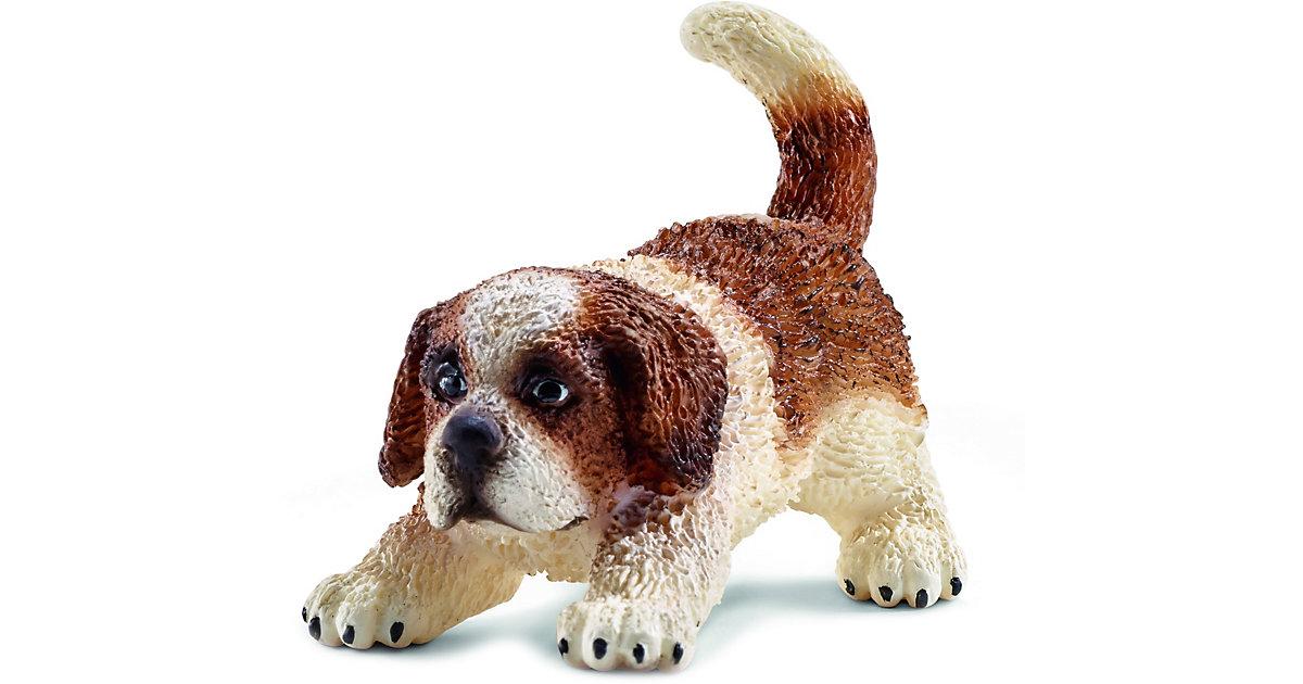 Hunde: 16834 Bernhardiner Welpe