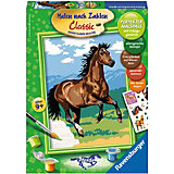 MnZ Serie D Pferde Galoppierendes Pferd
