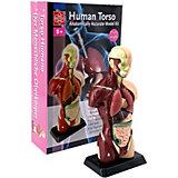 Анатомия человеческого тела, Edu-Toys