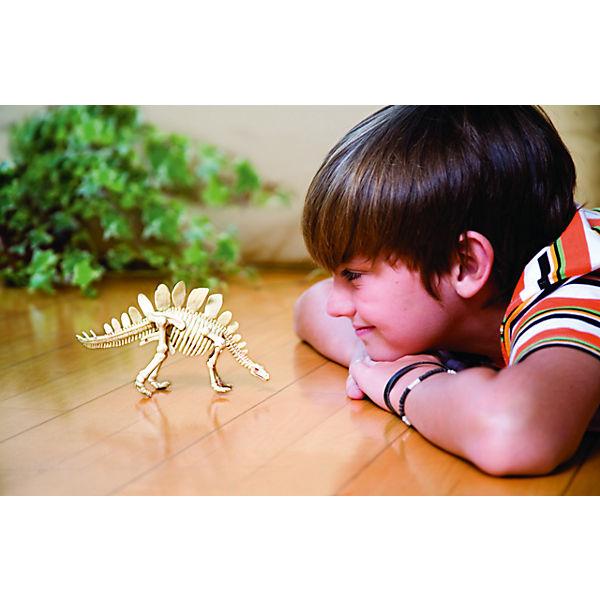 Скелет Стегозавра, 4М