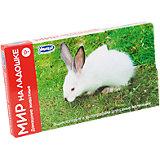 """Комплект карточек """"Мир на ладошке-3. Домашние животные"""""""