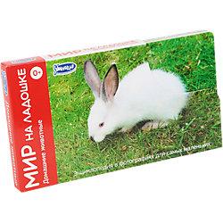 """Комплект карточек """"Мир на ладошке-3. Домашние животные"""" (часть 3.2)"""