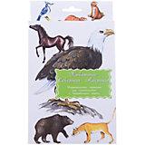 """Дидактические карточки """"Животные Северной Америки"""""""