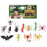 Набор из 12-и насекомых, Играем вместе