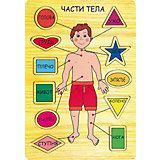Части тела, Мир деревянных игрушек