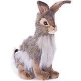 Чернохвостый заяц, 23 см