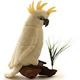 Большой белохохлый какаду, 22 см