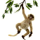 Паукообразная обезьяна, 44 см