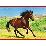 """Альбом для рисования """"Благородный конь"""", 20л"""