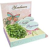 """Подарочный набор для выращивания """"С днем рождения"""" - Бабочка Happy Plant"""