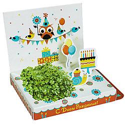 """Набор для выращивания """"С Днем Рождения!"""" - Совенок Happy Plant"""