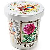 """Набор для выращивания """"Астра"""" Rostok Visa"""