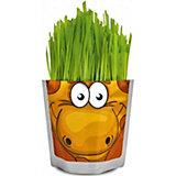 "Набор для выращивания ""Сафари"" - Жираф Happy Plant"