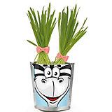 """Набор для выращивания """"Сафари"""" - Зебра Happy Plant"""