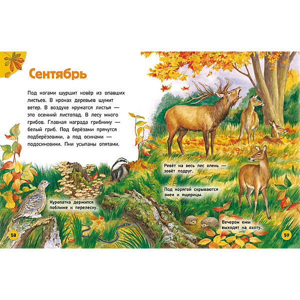 Природа, Энциклопедия для малышей