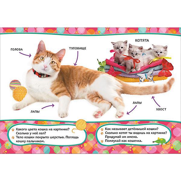 Эти удивительные кошки, Всё-всё-всё для малышей