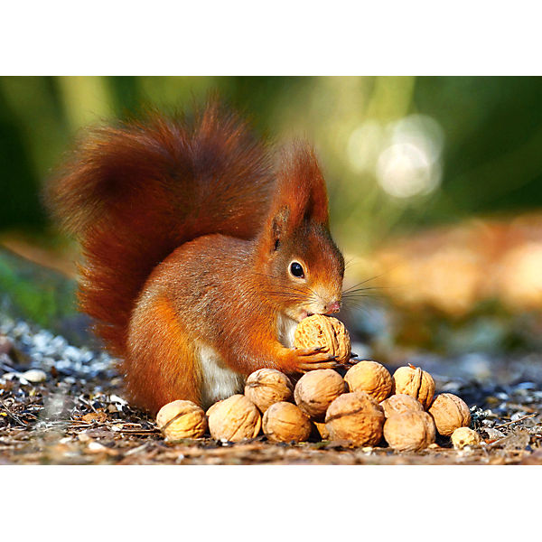 "Пазл ""Белка с орешками"", 180 деталей, Castorland"