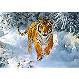 "Пазл ""Амурский тигр"", 500 деталей, Castorland"