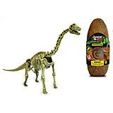 Яйцо динозавра - сборная модель Брахиозавр, Geoworld