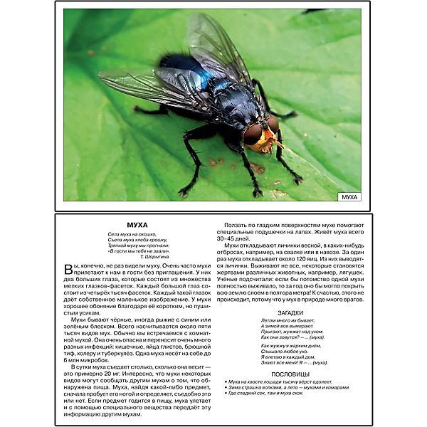 """Карточки """"Расскажите детям о насекомых"""", Мозаика-Синтез"""