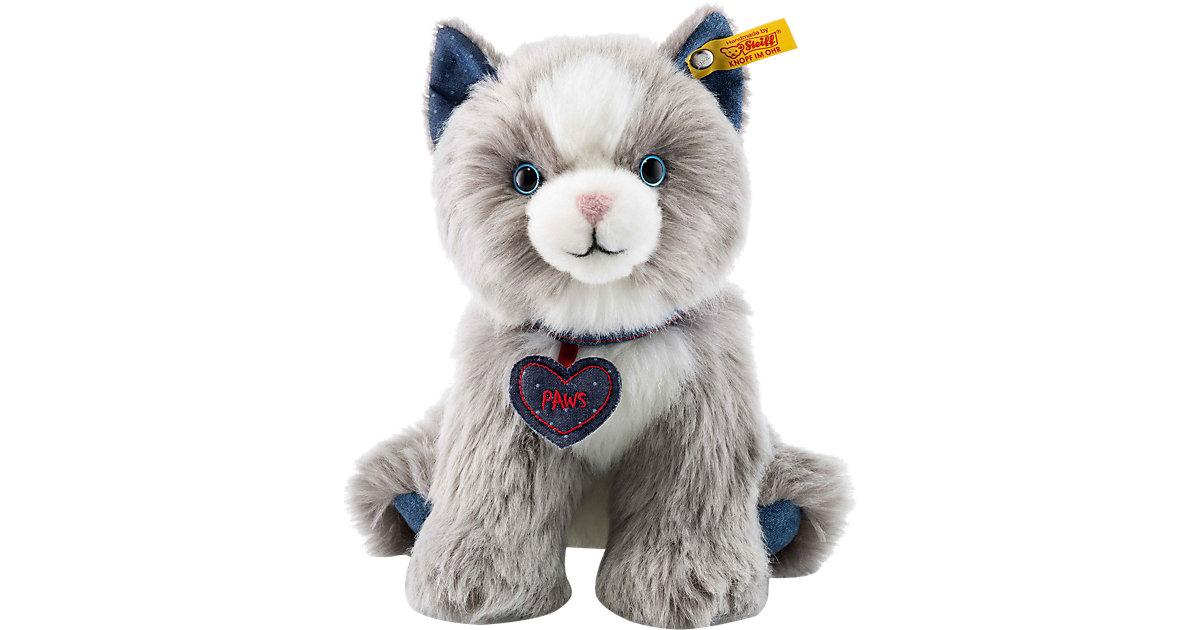 Paws Katze