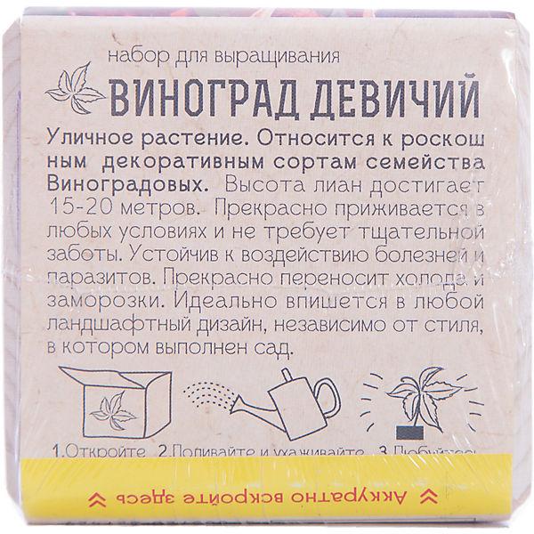 """Набор для выращивания """"Виноград Девичий"""", Экокуб"""