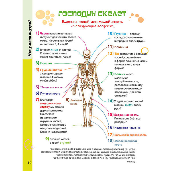 Тело человека
