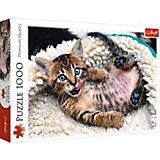 Пазлы Веселый котенок, 1000 элементов
