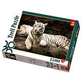 1500 дет. - Бенгальские тигры