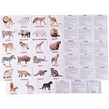 """Набор обучающих мини-карточек Вундеркинд с пелёнок """"Дикие животные"""" 40 штук"""