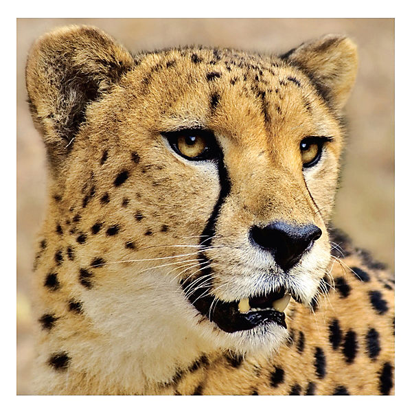 "Пазл ""3 в одном"" гепард, тигр и лев"
