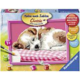 Раскрашивание по номерам «Спящий щенок» Размер картинки – 24*18 см