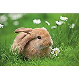 Пазл «Кролик в ромашках» XXL 150 шт #