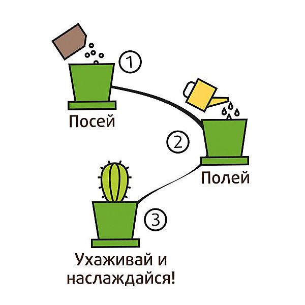 Набор для выращивания Кактус Егоза