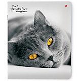 """Тетрадь """"Кошки. Яркий взгляд"""" 48 листов, клетка, 5 шт., рисунок в ассортименте"""