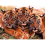 """Раскраска по номерам на картоне Color KIT """"Тигрята"""", 30х40 см"""