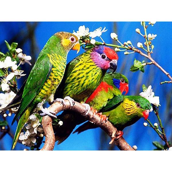 "Раскраска по номерам на картоне Color KIT ""Волнистые попугаи"", 30х40 см"