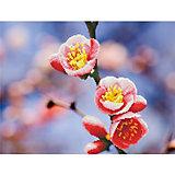 """Алмазная мозаика Фрея """"Цветущий абрикос"""", 52х39,5 см"""