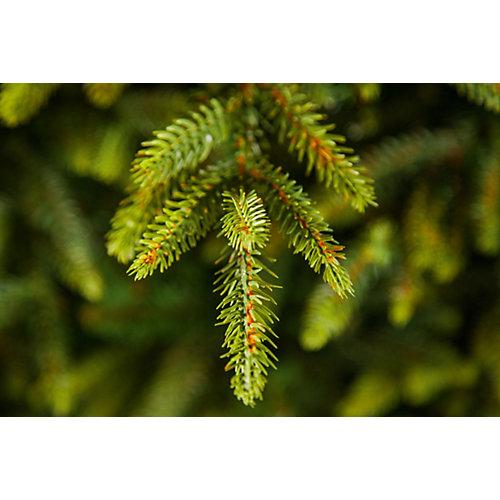 """Ель """"Королевская премиум"""" , Зеленая, 215 см. - зеленый от Triumph Tree"""