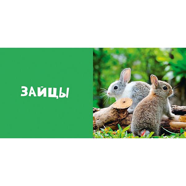 Первые слова. Животные. Фотокнига